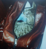 Tierversand - Cat Content